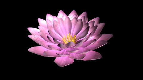 Lotus flower rotate Animation