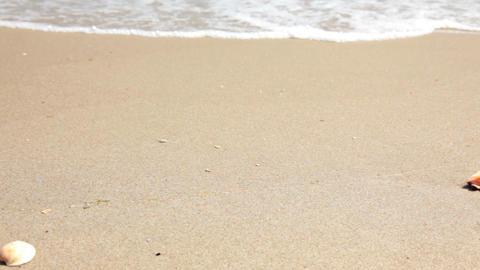 Starfish on the beach Stock Video Footage