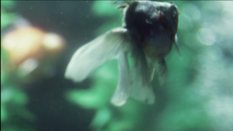 aquarium fish Footage