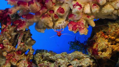 aquarium fish Live Action