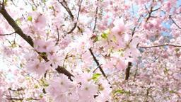 Springtime GIF