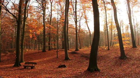 Sunny Autumn Forest Stock Video Footage