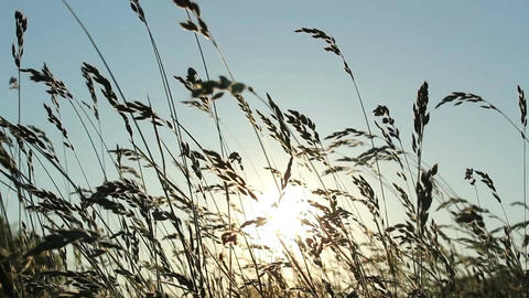 Grass and Sunlight Stock Video Footage
