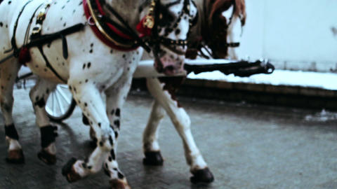 Two horses in harness Stock Video Footage