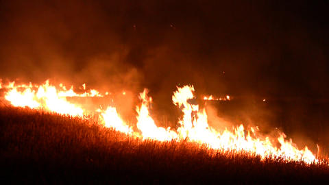 Night fire in the field Footage