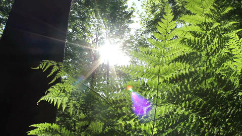 Fern in the forest Stock Video Footage