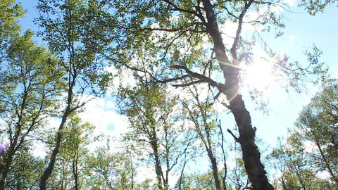 Sunny Forest Stock Video Footage
