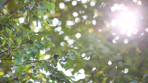 Sun through the leaves Footage