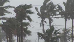 Hurricane wind palm trees Footage