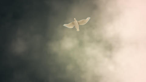 White Dove Descending Among Light Rays Stock Video Footage
