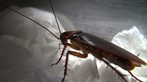 cockroach in the kitchen Stock Video Footage