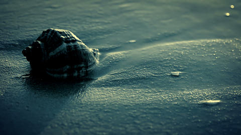 Night. Seashell on the beach. Close-up Stock Video Footage