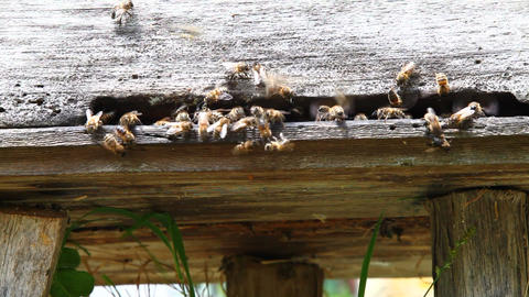 Bees and hives Stock Video Footage