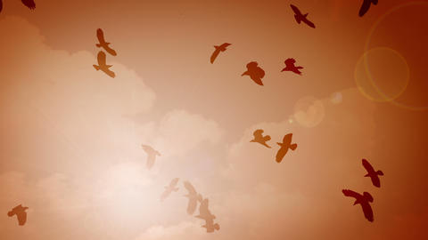 Many silhouettes of birds in the sky with sun Stock Video Footage