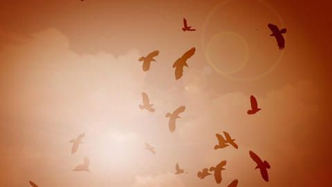 Many Silhouettes Of Birds In The Sky With Sun stock footage