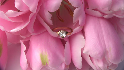 Ring in a flower Stock Video Footage