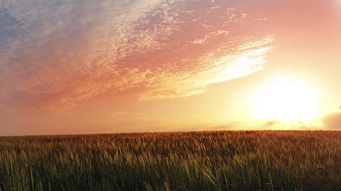 Sunset over wheat field. Timelapse Stock Video Footage