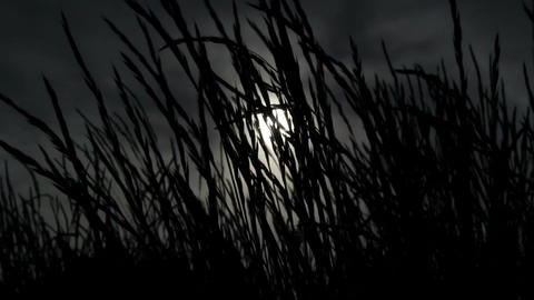 Dark Grass Stock Video Footage