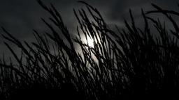 Dark Grass Footage