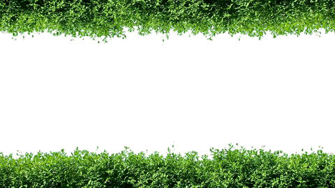 Green Hedge Frame stock footage