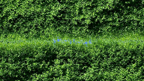 Green hedge frame Stock Video Footage