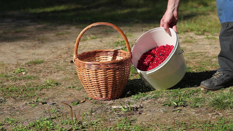Basket Berries and Mushrooms Stock Video Footage