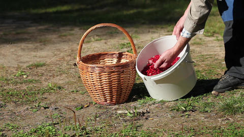 Basket Berries and Mushrooms Stock Video Footage