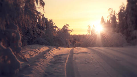 Beautiful sun rising in winter forest Stock Video Footage