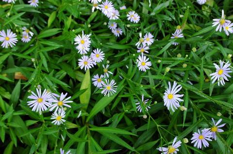 flower in the garden 相片