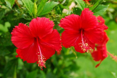 flower in Humayun