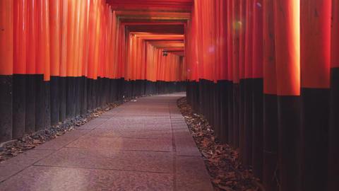 Fushimi Inari Taisha, Kyoto Torri Gate Shrine. No people. Japan Tourism, Travel Live Action