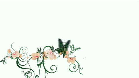 butterfly & flower Animation