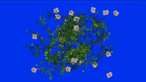 flying flower,spring scene Stock Video Footage