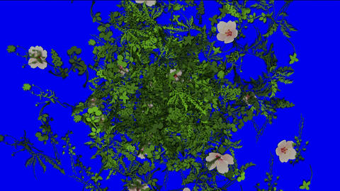 flying flower,spring scene Animation