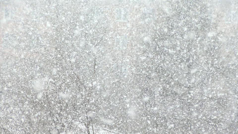 Snow, large flakes of snow create a winter background Stock Video Footage