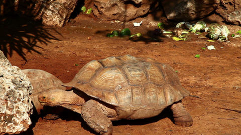 Turtle Footage