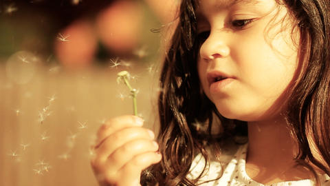 Dandelion little girl innocence Child Blowing a freedom spring childhood summer Footage