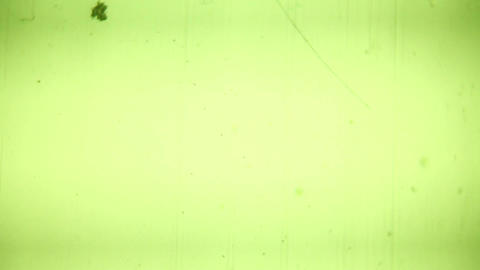 Vintage 8 mm Film Blinking Frame. HD Stock Video Footage