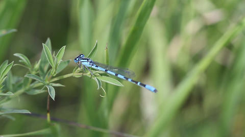 blue dragonfly Stock Video Footage