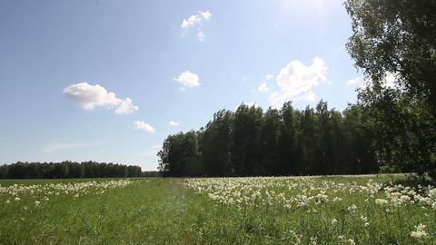 meadow and forest in summer Footage