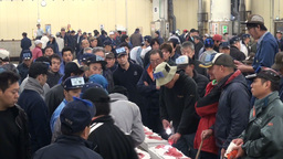 Crowded tuna auction in Tokyo, Japan Stock Video Footage