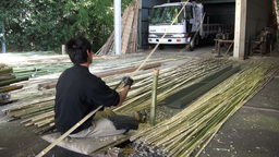 A Japanese man is cutting long bamboo sticks in a Stock Video Footage
