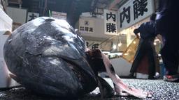 Fish head and carts at the Tsukiji fish market in Stock Video Footage