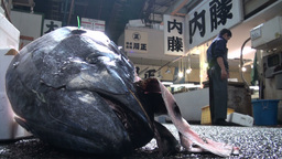 Fish head and carts at the Tsukiji fish market in  Footage