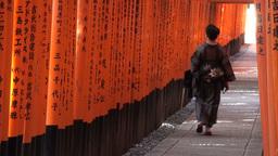 Geisha lady walks through vermillion torii gates i Stock Video Footage
