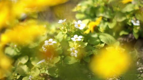 HD A 0096 Footage