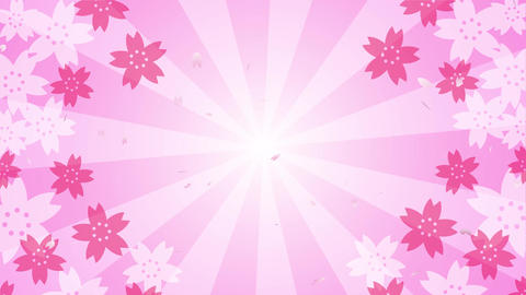 Cherry blossoms and radial background video Animation