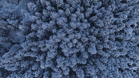 Aerial tilt up from snowy tree tops to scenic mountains during winter Live Action