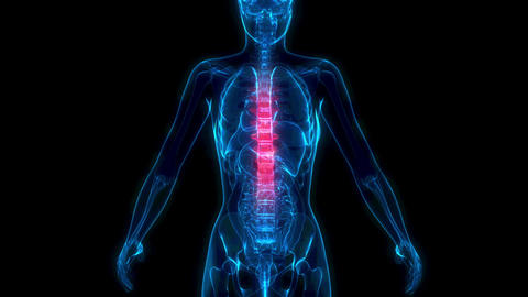 Thoracic, middle zone of human spine on x-ray body - human body Animation