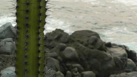 Cactus in the Beach 4 Footage